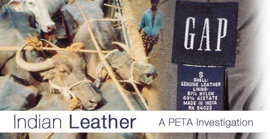 The Indian Leather Trade: CLICK HERE