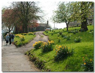 Picture of spring bulbs in Middleton-in-Teesdale