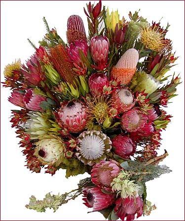 Exotic Protea Flowers for the Retail Florist