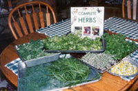 Pen's home grown hergs ready for drying.