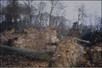 Damaged trees