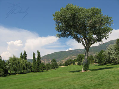 Lone tree at Valley View Golf Course