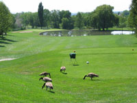 Birds on the 15th tee at Valley View golf course