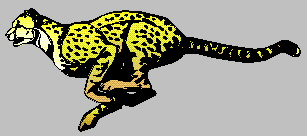 Graphic of a Cheetah!