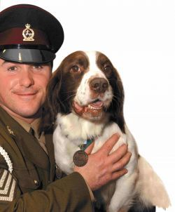 Picture of dog Buster with handler Sergeant Danny Morgan