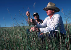 An NRCS range specialist assists a landowner in South Dakota with identifying grasses beneficial to good range management.  (Photo: Tim McCabe/USDA Natural Resources Conservation Service)