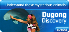Dugong Discovery