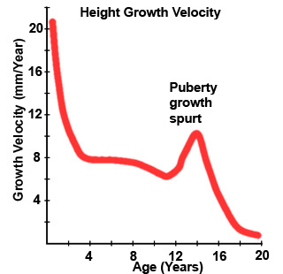 Puberty Growth Spurt