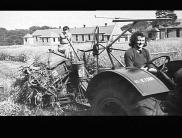 6 B SUNSHINE BINDER OPERATING FOR THE YORKSHIRE W.A.E.C NEAR HALIFAX. ALTHOUGH (THIS PHOTO) SHOWS TWO LAND-GIRLS APPARENTLY OPERATING THE OUTFIT, THERE WAS USUALLY A MAN ABOUT. THE CROP OF OATS IN (THIS PHOTO) WAS PARTICULARLY HEAVY AND DOWN AND TANGLED: SEPT 1943 THE `LAND-GIRLS' WERE YOUNG WOMEN WHO VOLUNTEERED TO WORK ON THE LAND DURING THE 1939-45 WAR.
