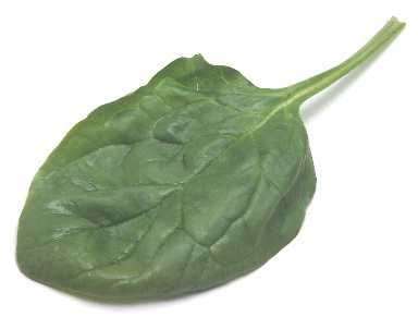 common garden spinach: