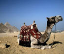 Camels at the Pyramids - guardianholidayoffers.co.uk