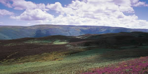 Moorland landscape with heather in August