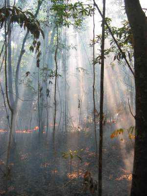 smoke from ground fire in a forest