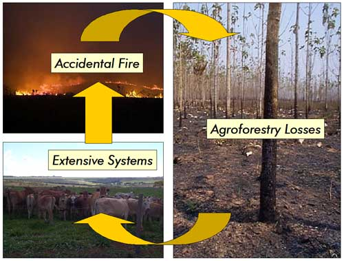 Cycle of agriculture, accidental fiire, agroforestry losses