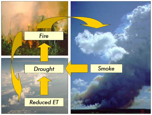 Cycle of fire, smoke and reduced evapotranspiration
