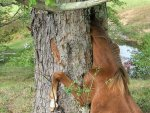 funny picture gallery - Seabiscuit! Barbaro!  And Elmers?