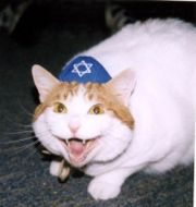 Even cats hate those Jews.