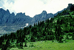 North Central Rockies forests