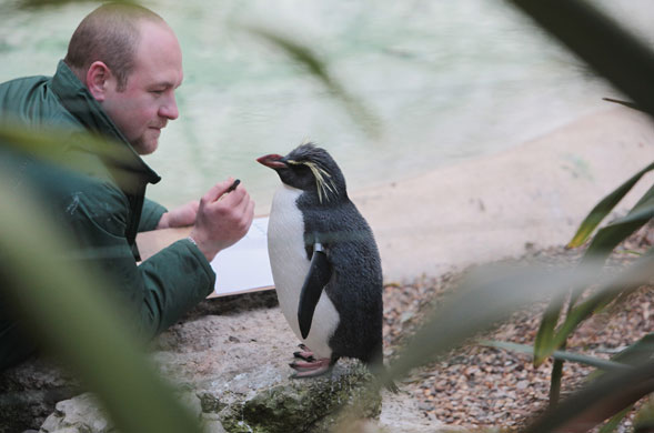 London zoo: Zoo keeper Tim Savage makes a record of the number of rock hopper penguins