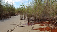 Gulf Coast oil spill Get the latest updates and perspectives on the oil spill that is threatening the Gulf Coast