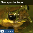 New species discovered