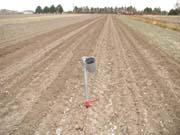 Bare garlic field at planting time, November 2002