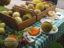 Melons for sale at student produce stand
