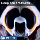 Deep sea creatures