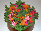 A flower salad could include dalilies and  impatiens. Both flowers are edible and declicious.