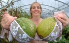 Rowie Meers has found the perfect way to support her melons - using old bras. She whipped out her undergarments to hoist up the fruit after her melon plants started drooping. Supportive customers then helped by sending in more than 40 unwanted brassieres to her farm during the summer. The mum of three says she found the answer to her problem 'right under her nose'
