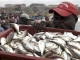 A worker carries a crate of fish at the fishing harbour of James town, in Accra