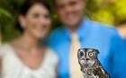 A cheeky owl almost stole the show on a couple's wedding day. The bird popped up in one of the official photographer's snaps and became a favourite picture in the wedding album. Libby Higgins and Jim Pearn were having their wedding photos taken at the John J Audubon Centre bird sanctuary in Pennsylvania when the injured owl, named Sam Adams, popped up. Libby, 26, explains: