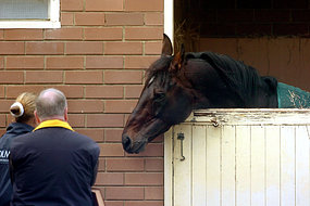 At least 50 horses in six locations across NSW and Qld are now suspected to have equine flu (File photo).