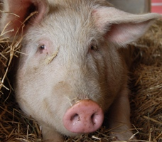 Take Action for Farm Animals