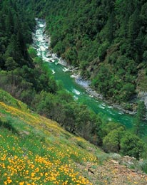 spring poppies in the North Fork American River canyon