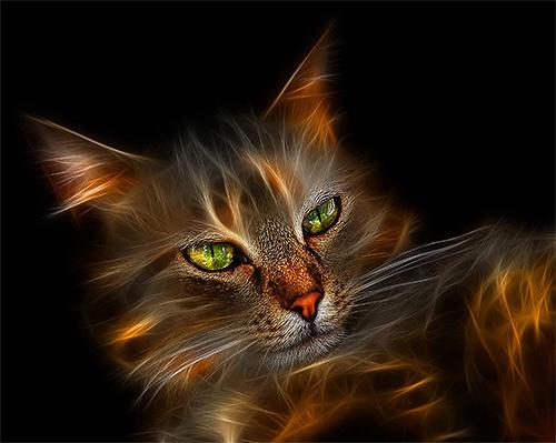 3D Cat Image