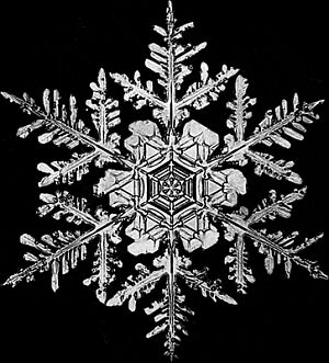 snowflake1 We are open today!