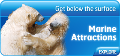 Sea World Marine Attractions - Get Below the Surface