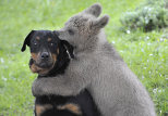 """Bear and dog's friendship and other """"animal stories"""""""