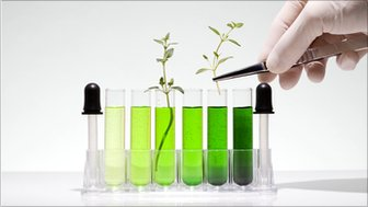 Test tubes with plants in