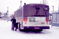 Photo of bus in snow