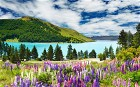 Win a holiday to New Zealand
