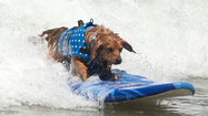 Pictures: Super-sporty dogs