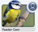 Click here to view the Feeder Cam
