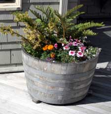 fern planted in whisky barrel