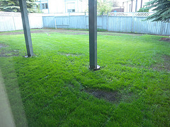 MHillyer posted a photo:Not long ago the area in front of the poles was a dirt patch.