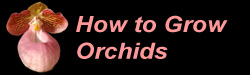 How to grow common orchids and other horticultural tips.