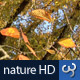 Nature HD | Golden Autumn Leaves I - VideoHive Item for Sale