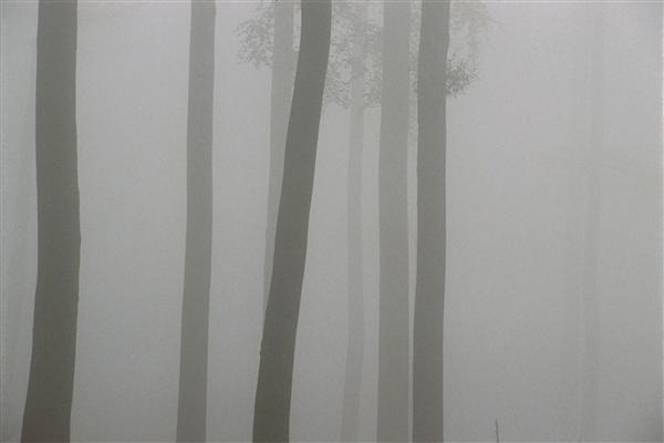 Silhouette of forest in mist