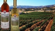 $20 for Wine Tasting for 4 & $40 Credit towards Wine Purchase ($60 value)